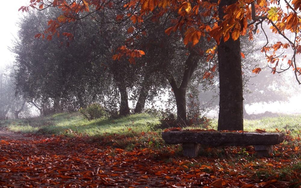 Stone-bench-in-autumn-park
